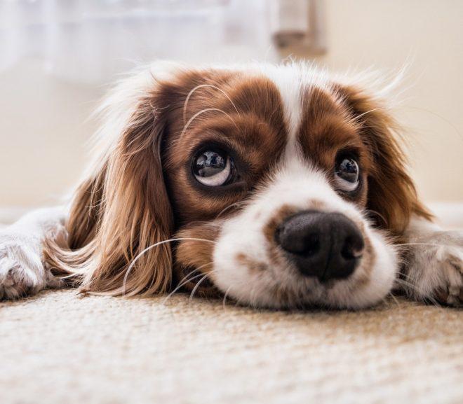 Problem: Sind Tiere Sachen i.S.d. Strafrechts? | [§²]